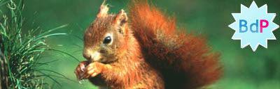 Jsindexer - Red Squirrel Version