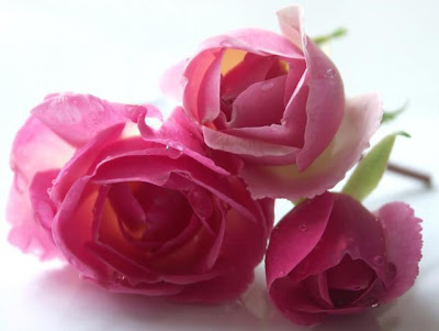 http://lh3.ggpht.com/_c_aV4lBCuC0/SvtRHjZBa_I/AAAAAAAAAW4/T9ctSPvwxBI/s400/rosas.jpg