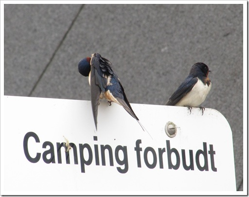 camping forbudt_thumb[2]