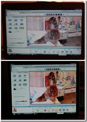 2011 feb 17 monitor