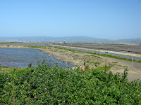 Home to Alviso Loop Logged 063.JPG Photo