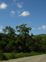 Sunol Regional Wilderness Hike 020.JPG Photo