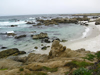 Pacific Grove Trail 231.JPG