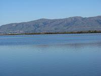 Moffet Shoreline 067.JPG