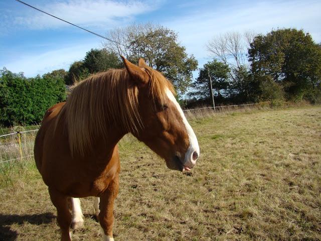 Vos plus belles grimaces de cheval et photos gag .... - Page 6 DSC00959