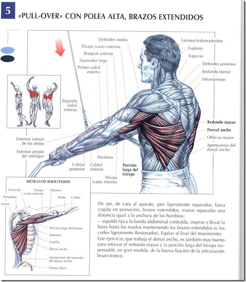 Musculación: \
