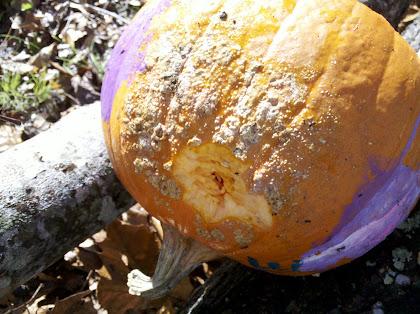 """Pumpkin 1 """"exit wound"""""""