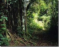 kakamega-forest-reserve
