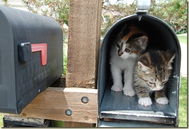 mail 001