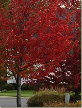fall 09 015