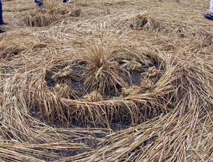 cercuri in lanuri 10