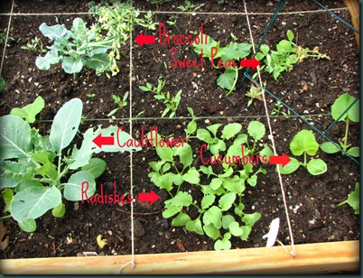 garden update 2wm.jpeg