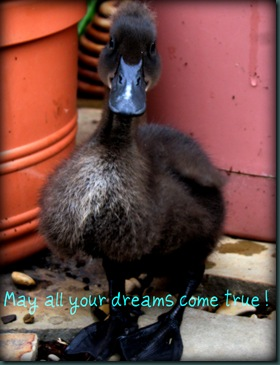 may all your dreams .jpeg
