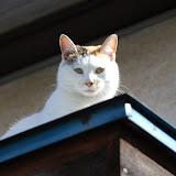 やたらセクシーポーズをする猫。