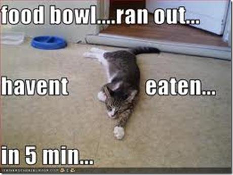 lol cat 4