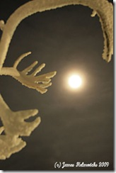 Moon-Glory-antler_2009