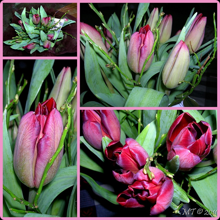 2010-01-19 tulips collage