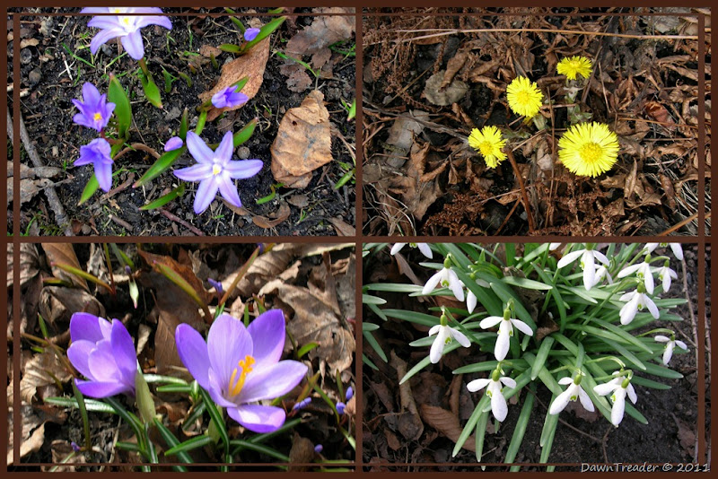 110410 spring flowers collage