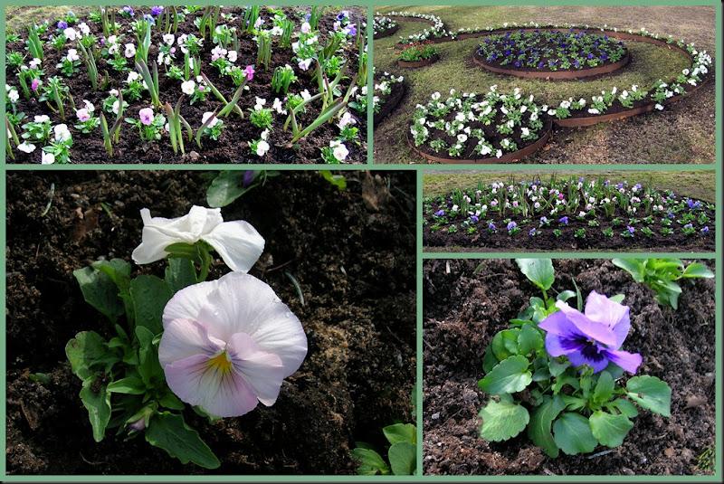 2011-04-14 spring flowers