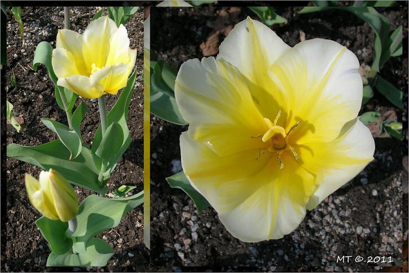 2011-04-26 spring1