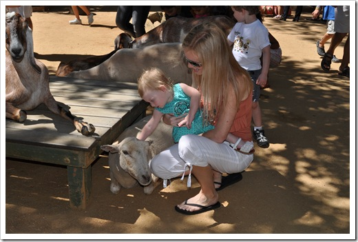 EC petting zoo 1