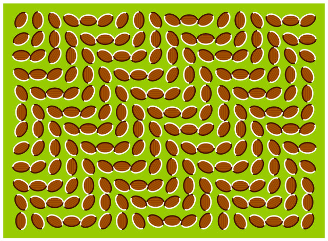 incredible-optical-illusions-coffee-beans