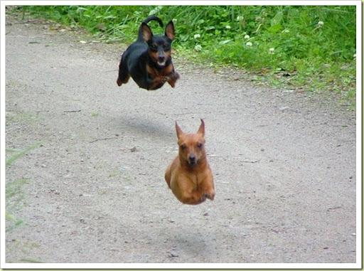 funny animals pics. Funny animals (Part 1)