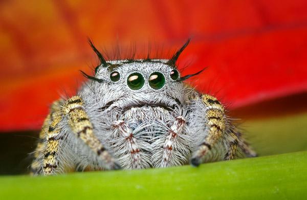 Фасеточный глаз паука