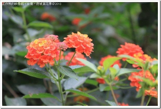 Tainan_Park_flower20