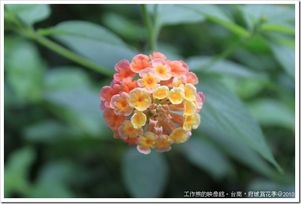 Tainan_Park_flower18