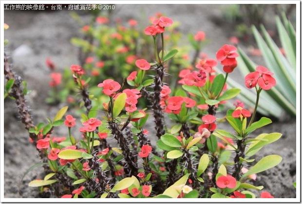 Tainan_Park_flower17