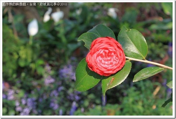 Tainan_Park_flower35