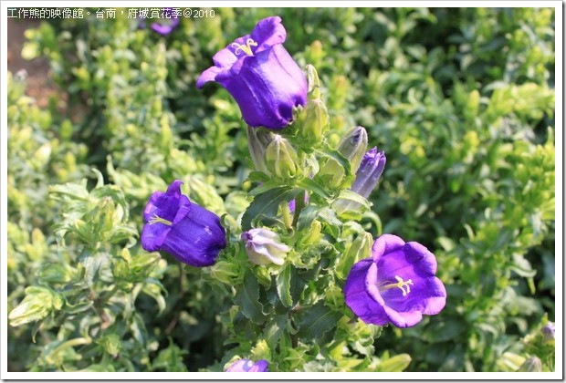 Tainan_Park_flower26