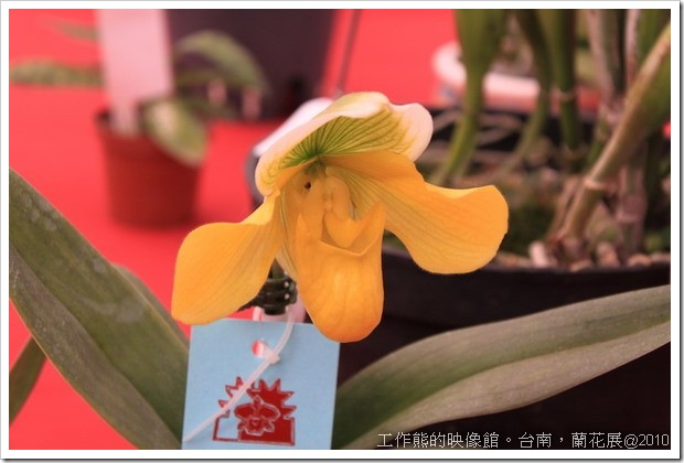 Tainan_orchid06
