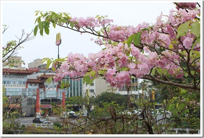 tainan_flower05