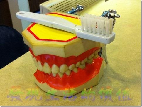 牙齒模型 示範如何刷牙