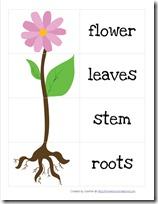 math worksheet : parts of a flower worksheet for preschoolers  parts of a flower  : Parts Of A Plant Worksheet Kindergarten