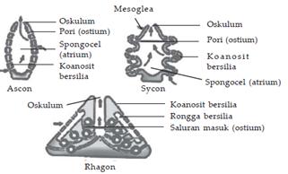 saluran air porifera