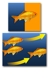goldfish-fish-swim-graphic