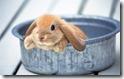 rabbit 2 desktop widescreen wallpaper