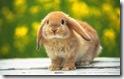 rabbit 9 desktop widescreen wallpaper