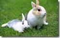 rabbit 33 desktop widescreen wallpaper