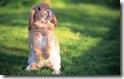 rabbit 25 desktop widescreen wallpaper