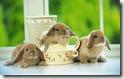 rabbit 35 desktop widescreen wallpaper
