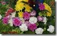 christmas flowers widescreen wallpaper 1920 x 1200 desktop widescreen wallpaper
