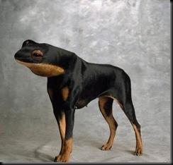 Frogdog