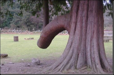 Tree penis