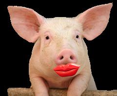 lipstickonapig3