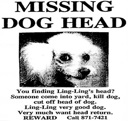 missing-dog-head