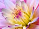 موسوعة رائعة من الورود 18